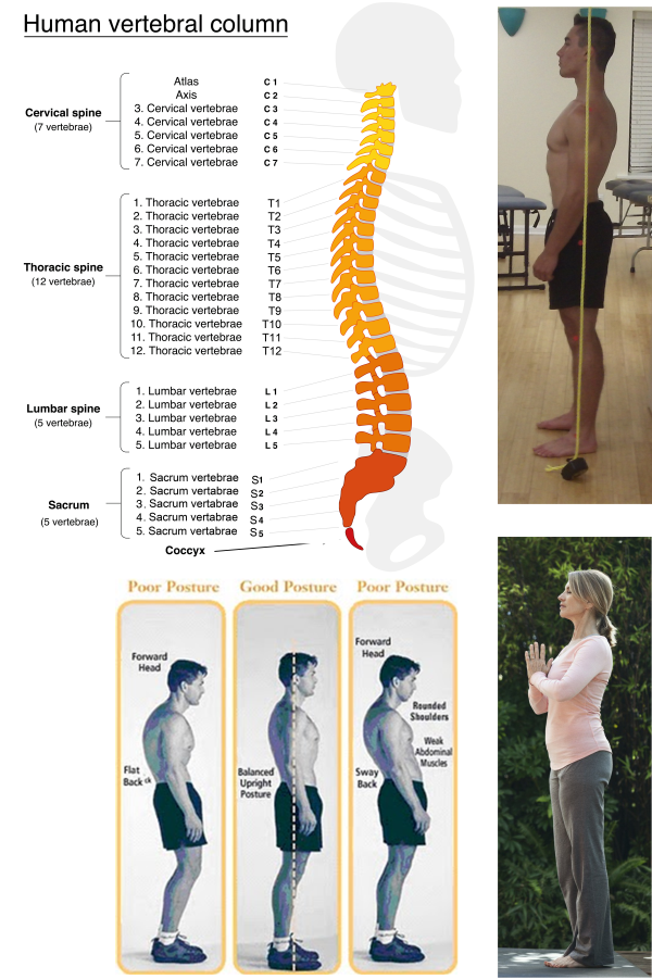 Posture lateral views good vs bad male & female segments labelled