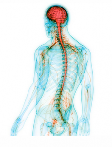 Network Spinal Analysis or NSA Care